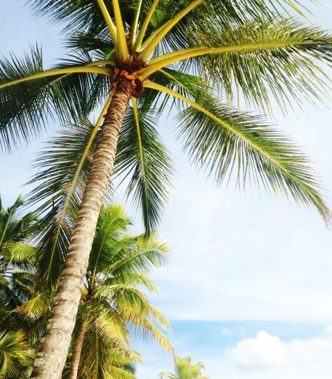 1 palm-tree-2095813.jpg